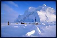 Лесная промышленность Аляски